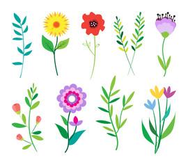 Big doodle set of flowers and leaves. Spring elements. Summer background. Vector illustration. Floral set