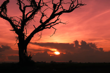 Silhouette image. Shadow of death tree with sunset. Background for halloween concept.
