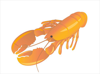 Red lobster or crayfish on white background