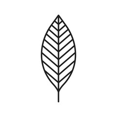Walnut leaf linear icon