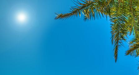 Shining sun over a palm tree