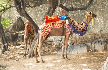 Docorative camel