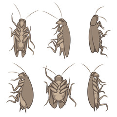 Cockroach. Vector Illustration Of Various Cockroaches From Different Views.