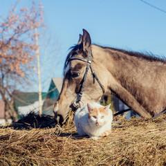 Little red kitten with white shetland pony