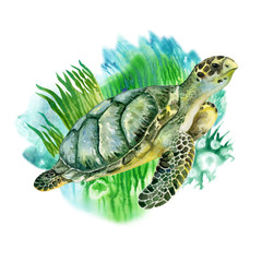 Sea green turtle with seaweed on white background. Sea life. Watercolor. Illustration. Picture. Image.