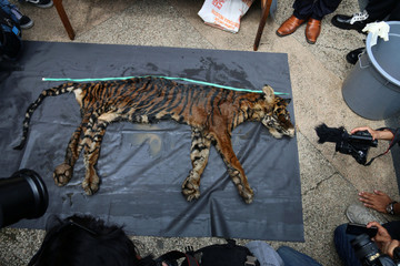 Reporters take pictures as police shows Sumatran tiger skin as evidence at the police headquarters in Medan