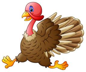 Cute turkey running
