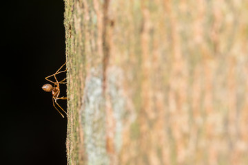 Red ant on the tree