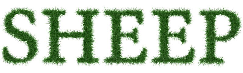 Sheep - 3D rendering fresh Grass letters isolated on whhite background.