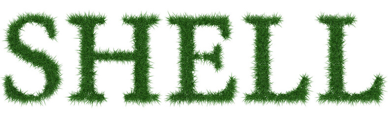 Shell - 3D rendering fresh Grass letters isolated on whhite background.