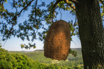 Large beehive house on a tree in the forest