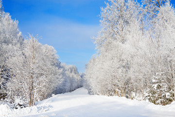 winter rural landscape with forest,snow,road and blue sky on a clear day.