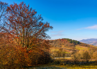 trees with red foliage in autumnal countryside. beautiful landscape in mountains