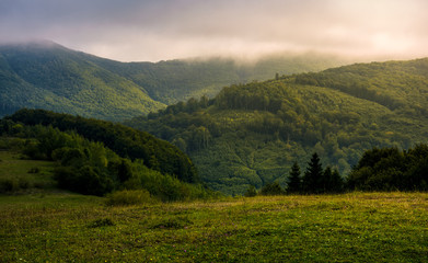 misty morning in green mountains. beautiful nature scenery with low clouds
