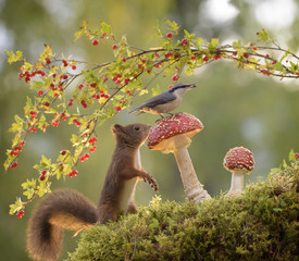squirrel looking at nuthatch on mushroom