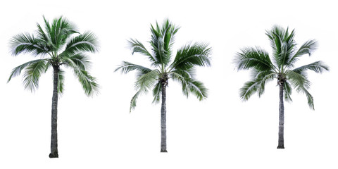 Set of coconut tree isolated on white background used for advertising decorative architecture. Summer and beach concept
