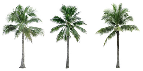 Foto op Plexiglas Palm boom Set of coconut tree isolated on white background used for advertising decorative architecture. Summer and beach concept