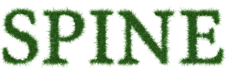Spine - 3D rendering fresh Grass letters isolated on whhite background.