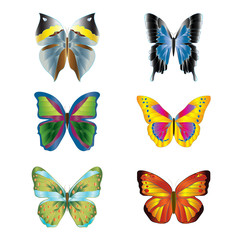 various colorful bright butterflies on white background