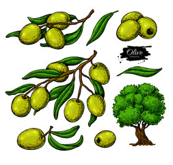 Olive set. Hand drawn vector illustration of branch with green food, tree, oil drop. Isolated drawing on white
