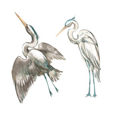 Set of hand drawn watercolor illustration of herons. Element for design of invitations, movie posters, fabrics and other objects.