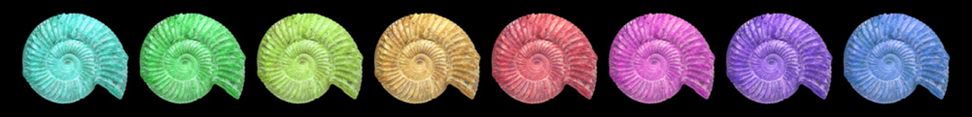 Aluminium Prints Spiral Ammonit