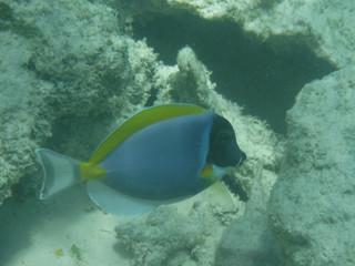 Mnemba Atoll, Sansibar 2