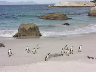 Pinguine1