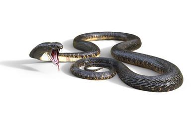 3d King Cobra The World's Longest Venomous Snake Isolated on White Background, King Cobra Snake, 3d Illustration, 3d Rendering