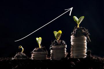 Growing Money,saving money,success  concept