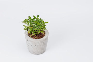 plants in flower pots on white background