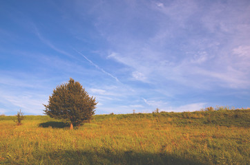 Summer landscape with lonely growing apple tree