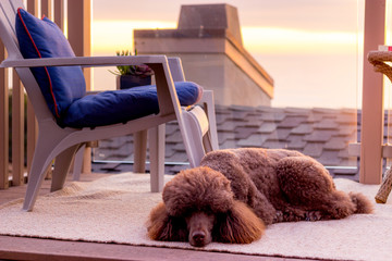 Dog sleeping on a balcony - Stock Photo