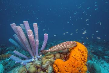 Foto op Aluminium Onder water Caribbean coral reef