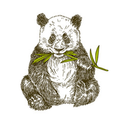 Panda with stalk bamboo. Vector illustration,