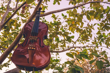 A violin hanging from a guava tree