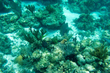 Underwater photography of the Caribbean Sea. Corals and fish