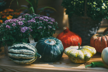 Several pumpkins of various form, type, color, and size are laying on wooden shelve near zucchini, among flowers in baskets after autumn harvesting, shallow depth of field, sunny autumn day