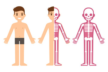 Male skeleton anatomy