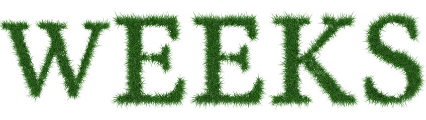 Weeks - 3D rendering fresh Grass letters isolated on whhite background.