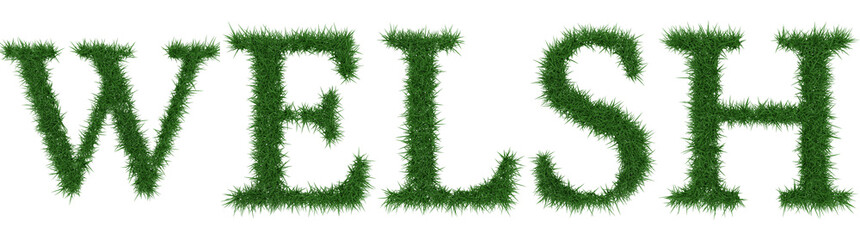 Welsh - 3D rendering fresh Grass letters isolated on whhite background.