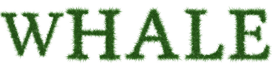 Whale - 3D rendering fresh Grass letters isolated on whhite background.