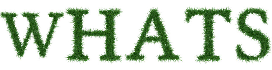 Whats - 3D rendering fresh Grass letters isolated on whhite background.