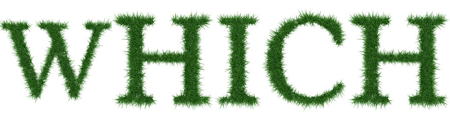 Which - 3D rendering fresh Grass letters isolated on whhite background.