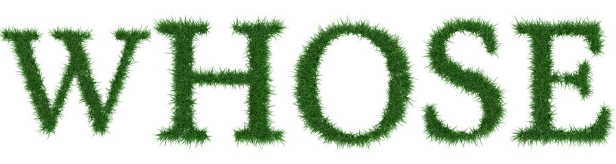Whose - 3D rendering fresh Grass letters isolated on whhite background.