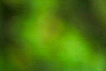 Abstract blurred green misty background, photo