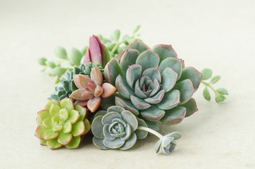 Bunch of beautiful flowering succulent plants