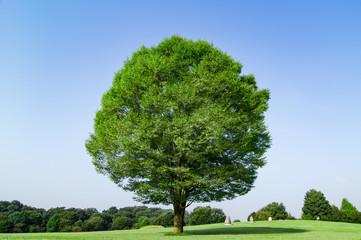 大室公園の大樹