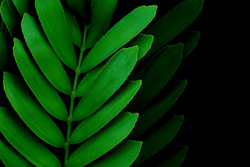 Low key green leaves dark nature background.