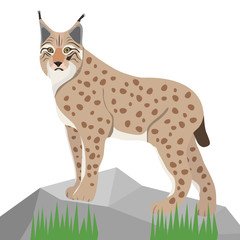 Lynx on white background, realistic lynx on stone